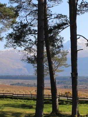 Old Pines Highlands