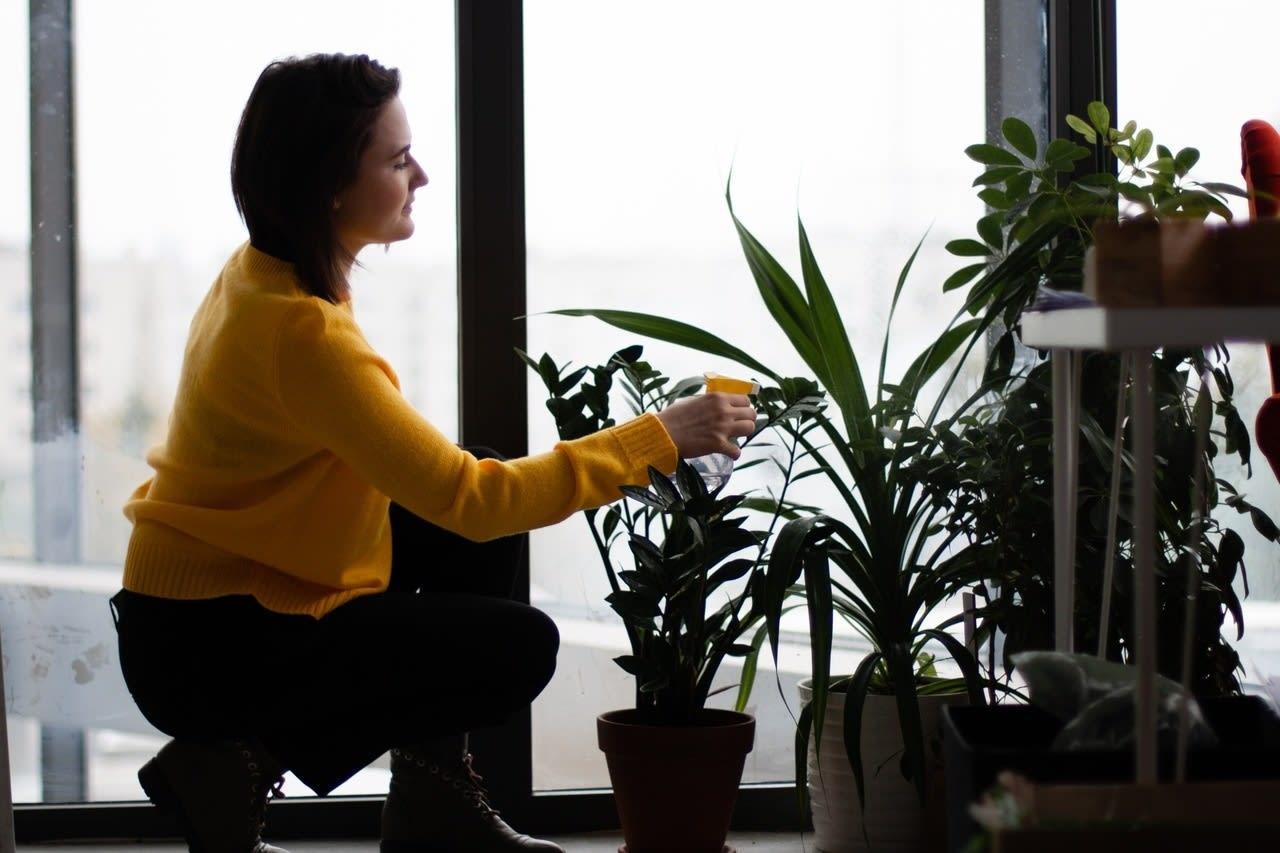 Imagem de destaque do post Conheça as melhores plantas para decorar seu apartamento