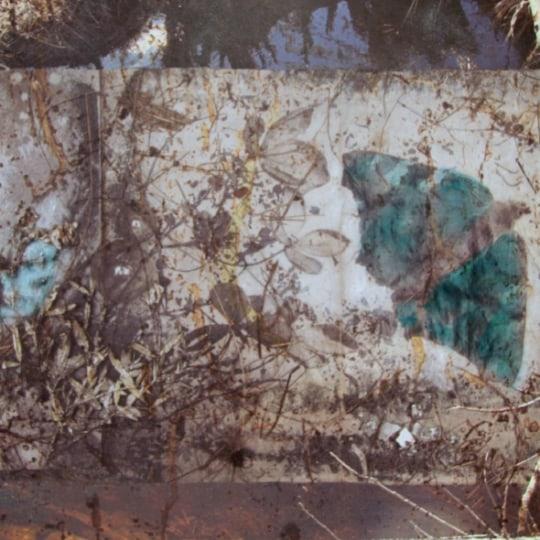 Firkløver under sommerfuglvinger by Elisabeth Werp | onArts