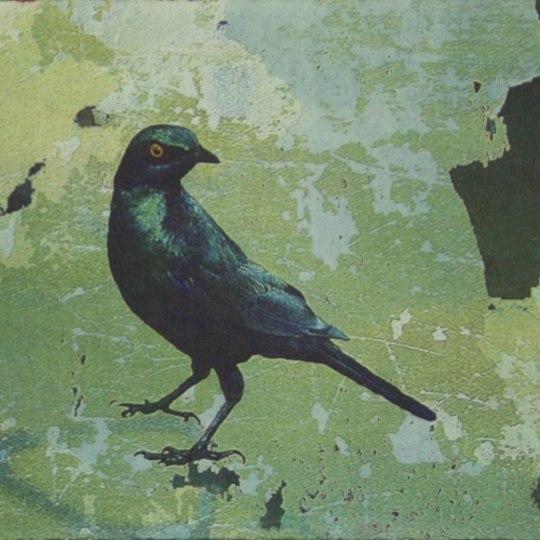 Blå fugl by Ingrid Lilja Arntzen | onArts
