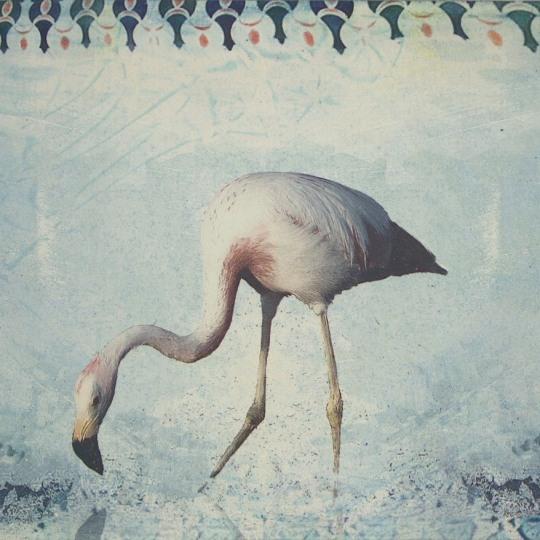 Flamingo by Ingrid Lilja Arntzen | onArts
