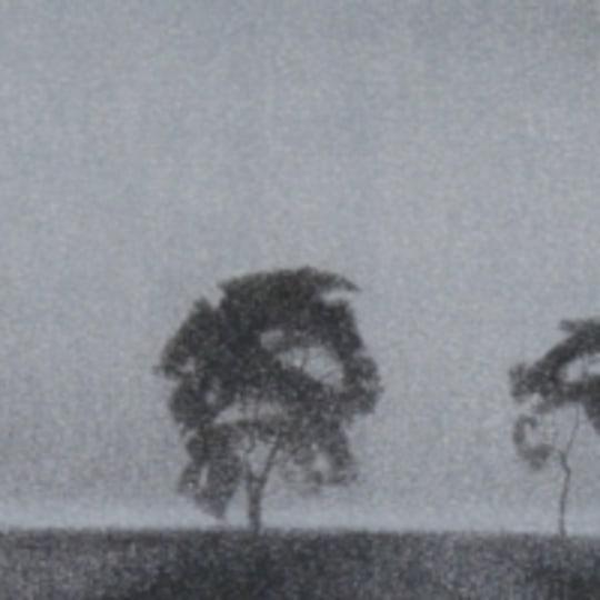 Tre trær i horisont by Christopher Rådlund | onArts