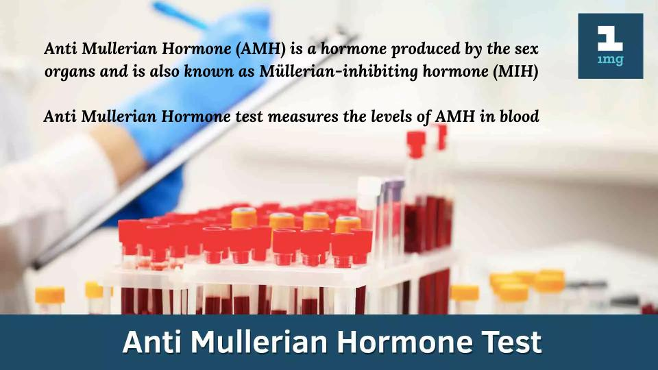Anti-Mullerian Hormone Test