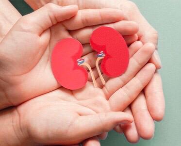 Kidney Function Test