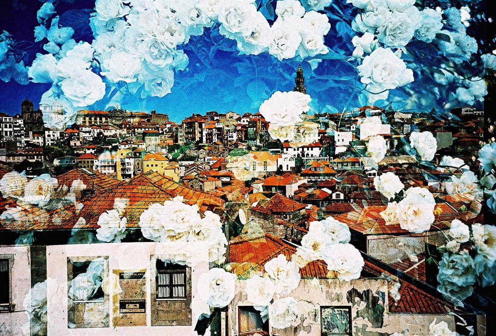 Roses in Portugal, by Yoshitaka Goto