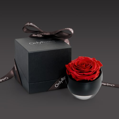 Roses for Offices - Feature 3