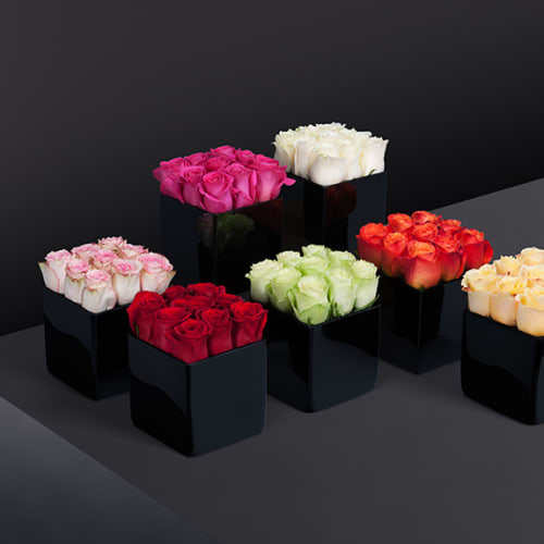 Roses for Estates - Feature 1