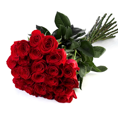 valentine's day roses  roses delivered across dubai, Natural flower