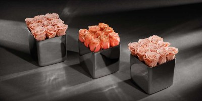 The New 'Infinite Rose Cube' and 'Classic Rose Cube'