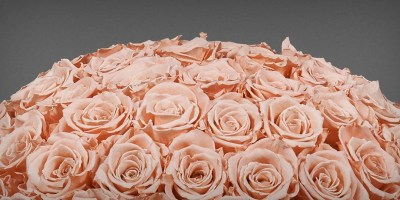 New And In Bloom: The InfiniteRose Punch Bowl