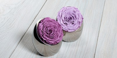 OnlyRoses Presents: Lilac Luxuries