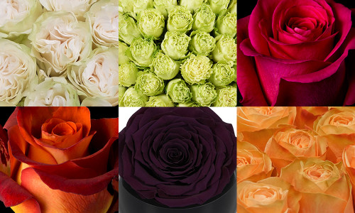 What luxury roses are on trend for autumn?