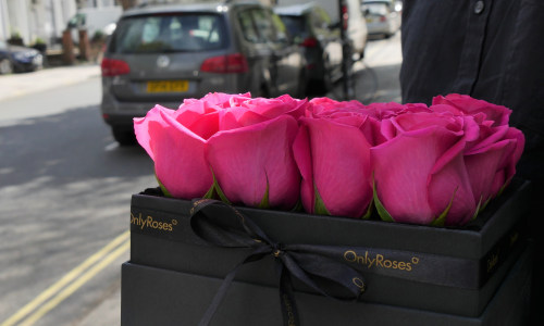 14 Days of Valentine's: Classic Rose Plaza