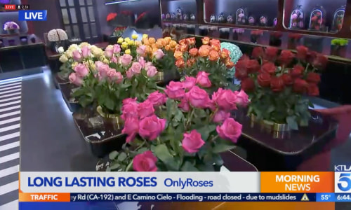 Long Lasting Roses at Beverly Hills