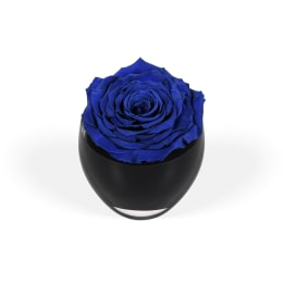 The Infinite Rose®