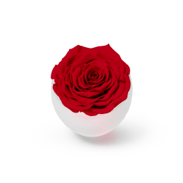 Valentine's Infinite Rose Blanc