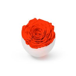 Infinite Rose Blanc