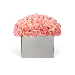 Classic Rose Modernist