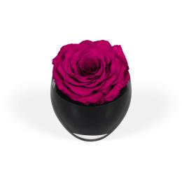 The Infinite Rose