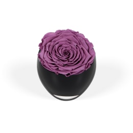 Lilac Luxury: The Infinite Rose