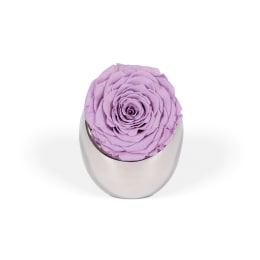 Lilac Luxury: Infinite Rose Luna