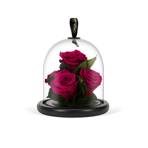 Valentine's Infinite Roses Delivered in London