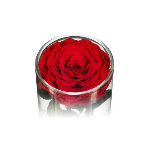 Infinite RoseEbony - Valentine's Day - OnlyRoses