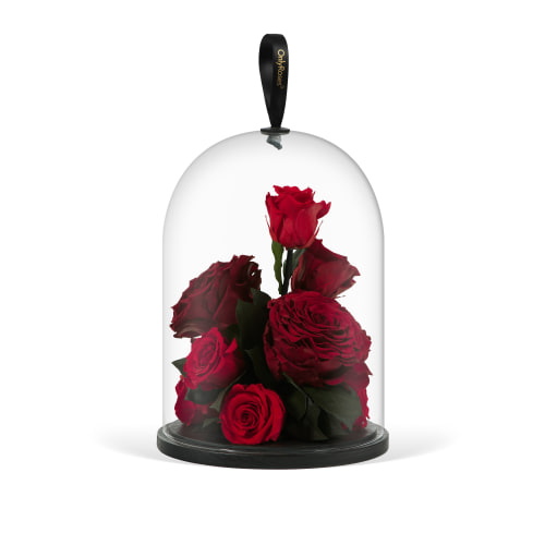 Infinite Rose Jewel - OnlyRoses - Roses Delivered throughout Los Angeles