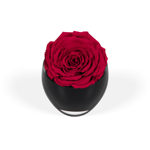 The Infinite Rose - Delivered Across Riyadh - OnlyRoses
