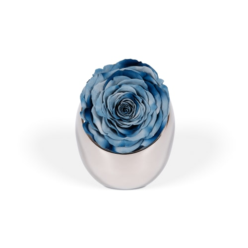 Infinite Rose Luna - OnlyRoses - The World's Finest Roses