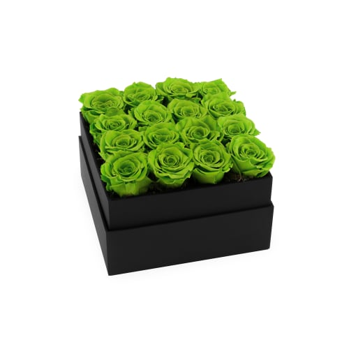 Infinite Rose Plaza - Green with Envy - OnlyRoses