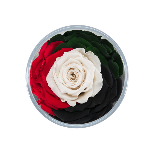 Spirit of the Union - Infinite Rose Ebony - Roses delivered throughout the UAE