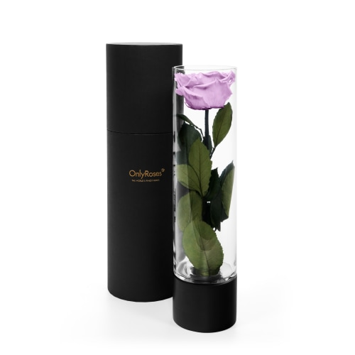 Infinite Rose Ebony - Lilac Luxuries - Roses delivered Dubai