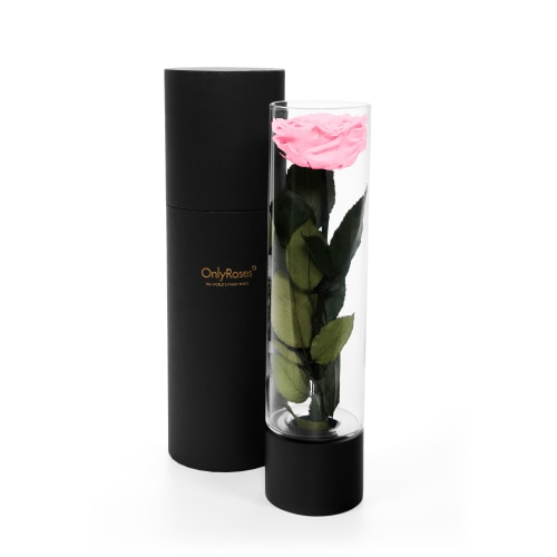 Infinite Rose Ebony - OnlyRoses - Roses delivered Los Angeles