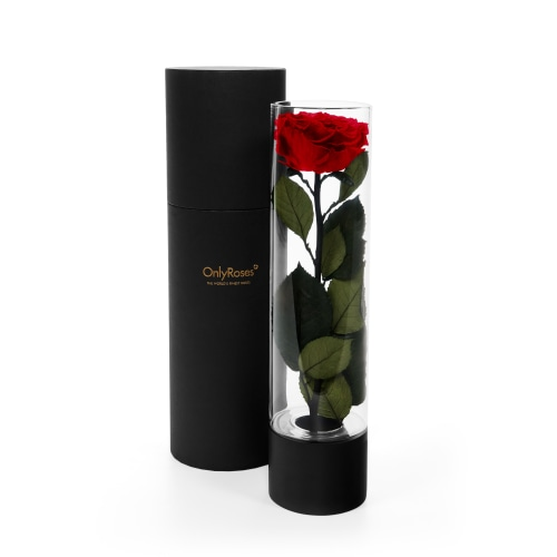 Valentine's Day Infinite Rose Ebony Delivered in London