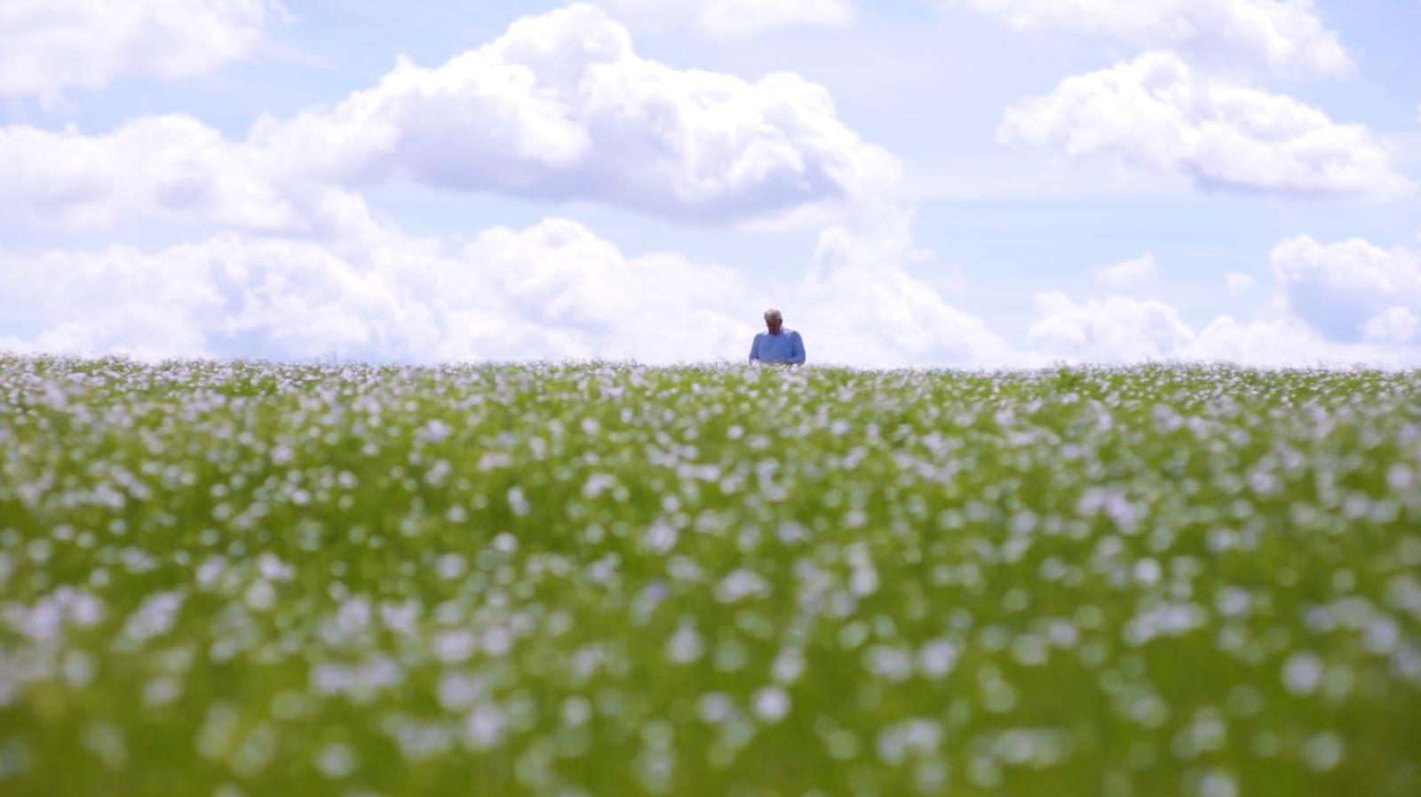 開滿藍色小花的亞麻田