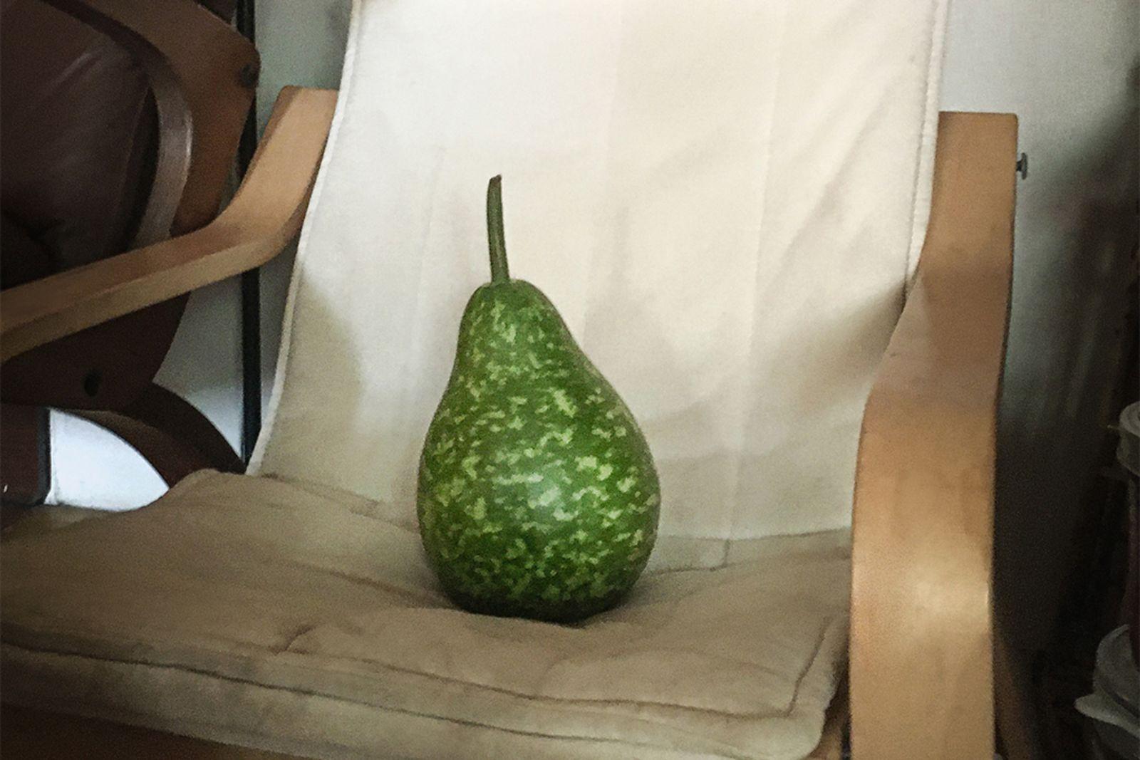 拿來做餃子內餡的瓠瓜坐落在一旁躺椅。