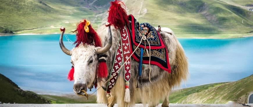 Tíbet al Completo