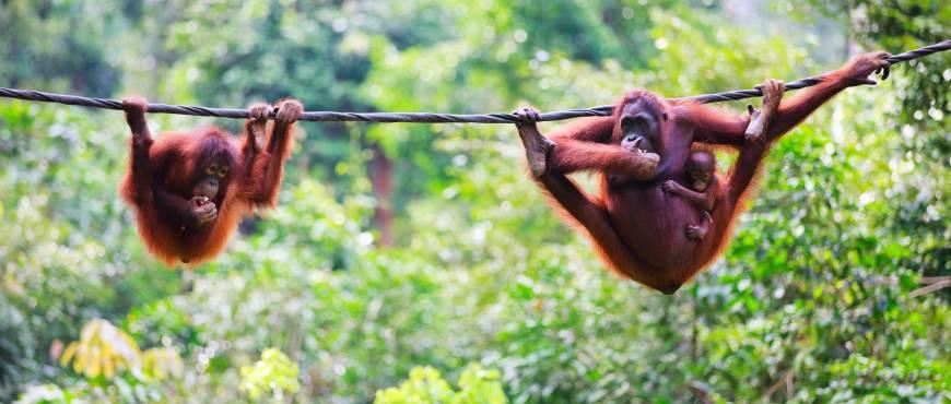 Gran Tour de Borneo