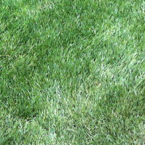 1459098771194_matted-lawn.jpg