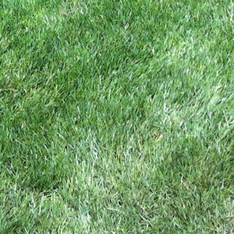 1459098771194_matted-lawn.jpg