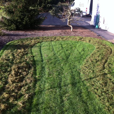How To Renovate A Lawn