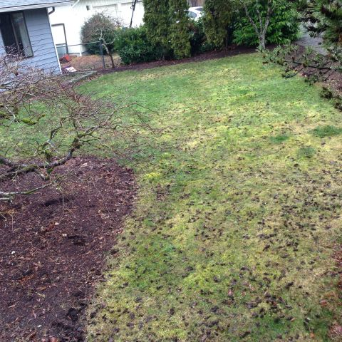 1463414754254_front yard after lawn aertor rental.JPG