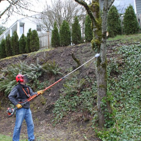 1466377831544_400_man-using-pole-saw-on-tree-branch.jpg
