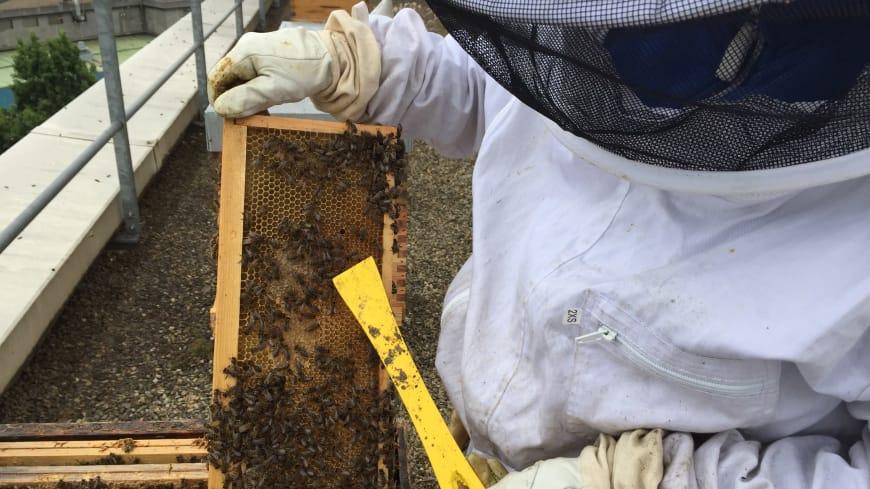 Cadres alvéolés contenant le miel stocké par les abeilles de l'Opéra Bastille