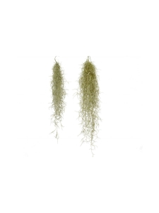 HUONE ett RUM - Naavatillandsia Tillandsia usneoides | Stockmann