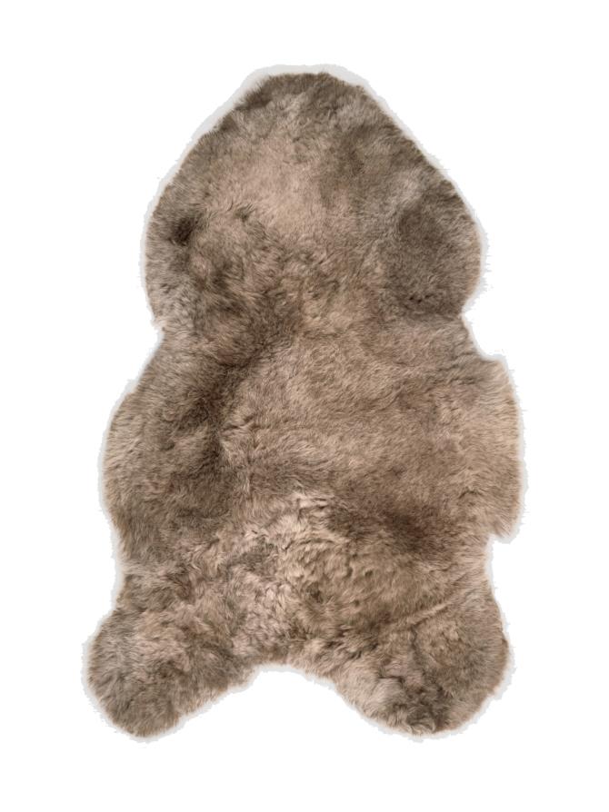 Islannin lyhytkarvainen lampaantalja