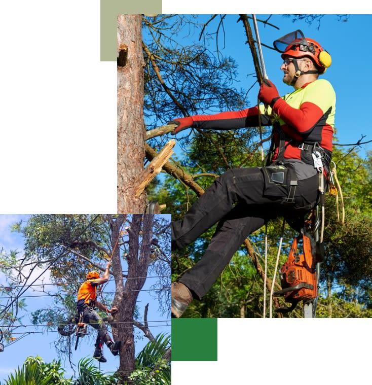 Local St George arborist