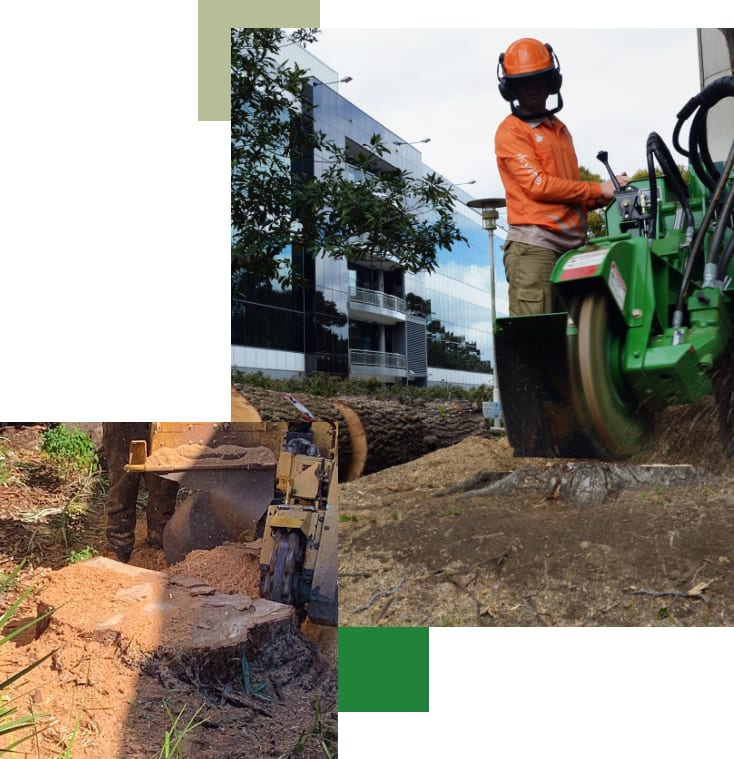 Tree Stump grinding and removal