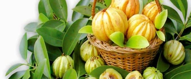 garcinia-cambogia-reviews-supplement